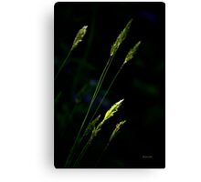 Grass Abstract Canvas Print