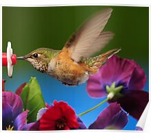 17 FEATURES...ITS SUCH A THRILL TO PHOTOGRAPH THESE HUMMINGBIRDS Poster