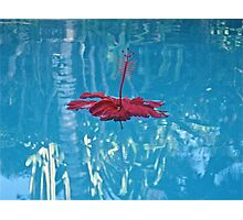 Floating Flower Photographic Print