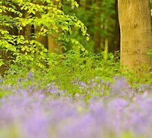 Micheldever Wood by Kasia Nowak
