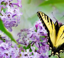 Swallowtail Butterfly on Lilacs Sticker