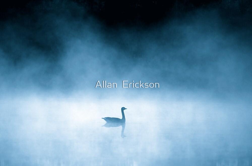 the widow... by Allan  Erickson