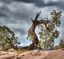 Trees Survival Mode by Bob Christopher