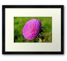 Beautiful but Painful Framed Print