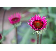 Photo of vivid magenta flower Photographic Print