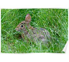 Nature photo of rabbit Poster
