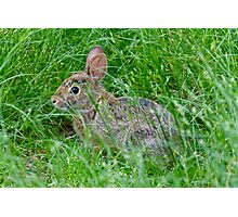 Nature photo of rabbit Photographic Print