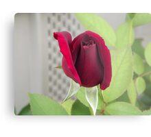 Red Rose for Cheryl Metal Print
