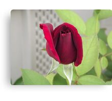 Red Rose for Cheryl Canvas Print
