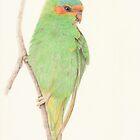 Musk Lorikeet by Catherine Gabriel