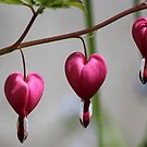 Three of Hearts by hummingbirds