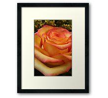 Orange Red Rose Framed Print