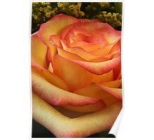 Orange Red Rose Poster