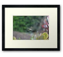 Spider & Web Framed Print