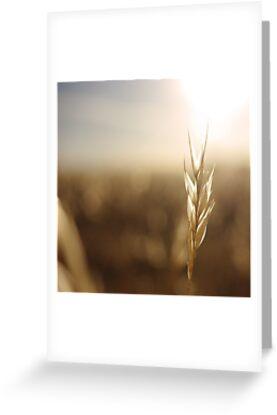 Grass Field by Andrejs Jaudzems