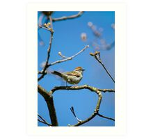 Chipping Sparrow in a Tree Art Print