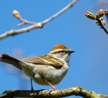 Chipping Sparrow in a Tree Sticker