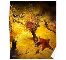 Anemone And Starfish Poster
