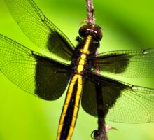 Dragonfly Art Widow Skimmer  Sticker