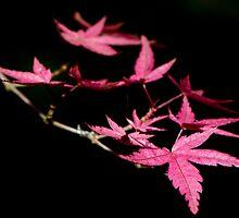 Spring Leaves by TeresaB