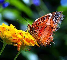 Butterfly Fresco by tigerwings