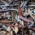 Leaf litter by Kell Rowe