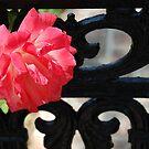 Iron Gate Rose by Rozalia Toth
