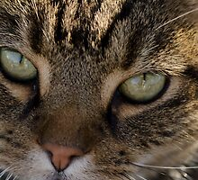 Cats Eye by reney03