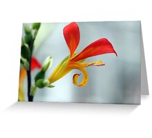 Unusual Red Flower Greeting Card