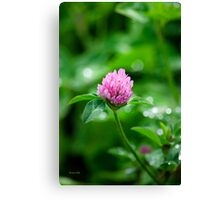 Pink Clover Flower Canvas Print
