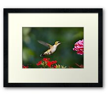 Summer Hummingbird Art Framed Print