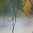 Twigs by David Wanden