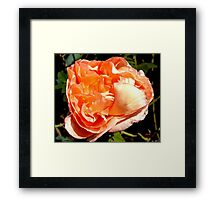Who ruffled my feathers...? Framed Print