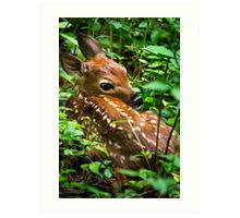 White Tailed Deer Fawn Art Print