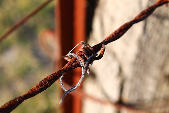 Barb Wire by David Wanden