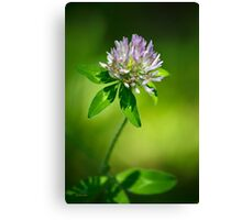 Purple Clover Flower Canvas Print