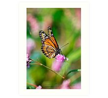 Colorful Viceroy Butterfly Art Print