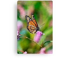 Colorful Viceroy Butterfly Canvas Print