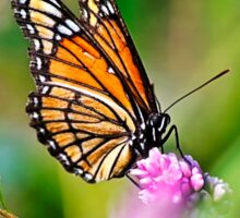 Colorful Viceroy Butterfly Sticker