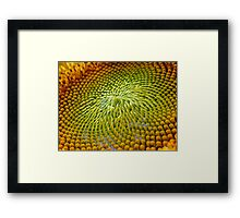 Nature Abstract Sunflower Framed Print