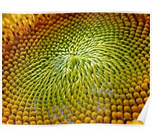 Nature Abstract Sunflower Poster