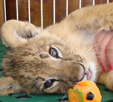 Baby Lion by WDaRos714