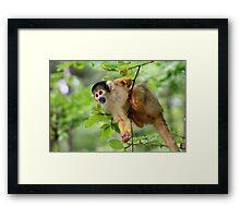 Curious Squirrel Monkey Framed Print