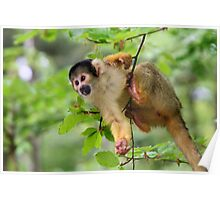 Curious Squirrel Monkey Poster