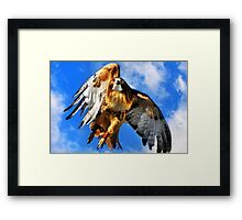 Red Tailed Hawk North Wind Framed Print