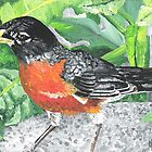 Robin on a Rock by Judy Bergmann