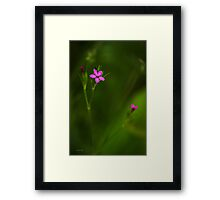 Deptford Pink Wildflower Framed Print