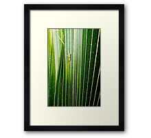 Lizard Amongst The Leaves Framed Print