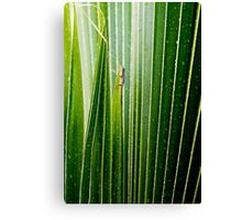 Lizard Amongst The Leaves Canvas Print