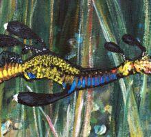 Weedy Sea-dragon Sticker